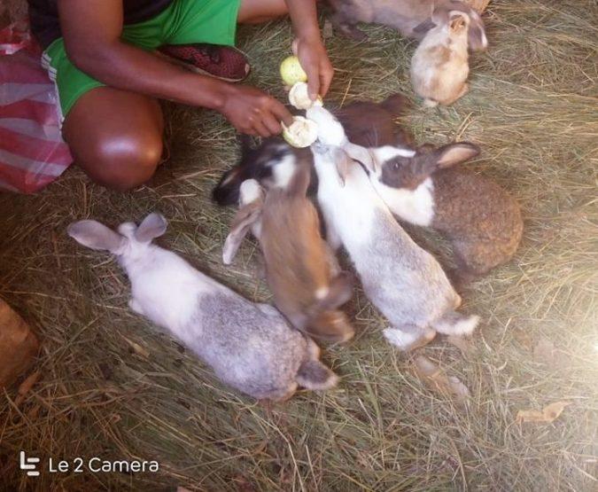 élevage de lapins au CEP